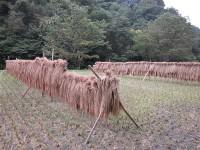 この稲藁が釉薬に