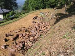 山から下ろした玉切りにした赤松
