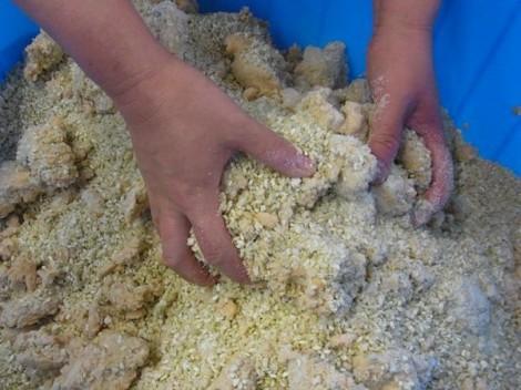 味噌作り 塩と混ぜた麹と、つぶした大豆を混ぜる