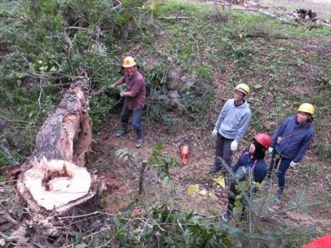 ヒノキの木を巻きにする