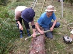 竹をのこぎりで切る