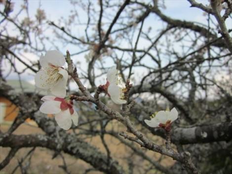 春の花 焼き物 陶芸 灰釉