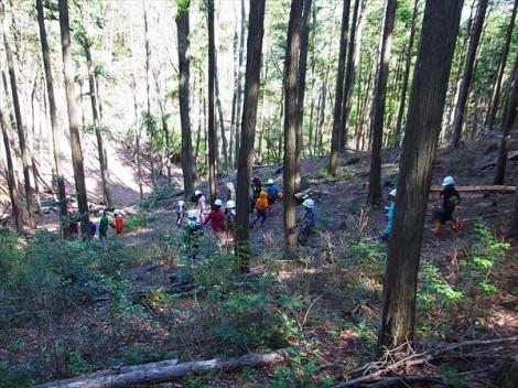 里山整備 間伐 ものづくり ヒノキ林