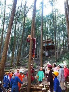 里山整備 ヒノキ林 間伐
