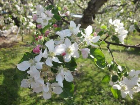 灰釉 和の器 春の花