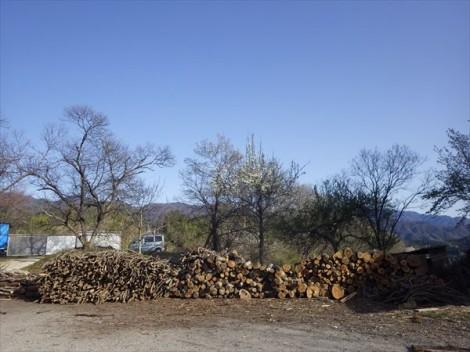 草來舎 灰釉 和食器 薪 りんご灰釉