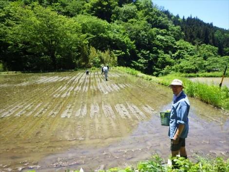 灰釉 藁灰釉 鉢 和食器 草來舎 田んぼ 田植え