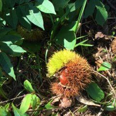 草來舎 里山暮らし 秋の食卓 栗 土鍋 和食器
