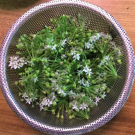 草來舎 里山暮らし 秋の食卓 ニラの花 和食器